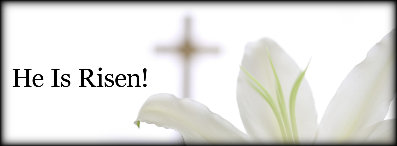 Easter - Lily - He Is Risen!